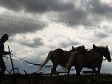 Seit dem Mittelalter geben Bauern ihre meteorologischen Beobachtungen von Generation zu Generation weiter.