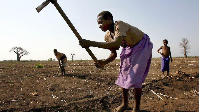 Bauern bei der Feldarbeit in Nsanje, Malawi.