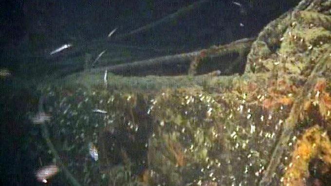Gift- oder Atomüll im Wrack eines Frachters vor Kalabrien.