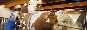 Nicht der Schutz der Tiere stünde im Vordergrund der Patent-Forderung, kritisieren Gegner.
