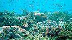 Schutz ist die einzige Lösung: Der Ozean lebt - bis er stirbt
