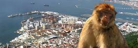 Touristen kommen vor allem wegen der Affen nach Gibraltar, Schmuggler wegen der Zigaretten.