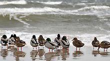 Vögel trotzen der Kälte, indem sie ihr Federkleid aufplustern.
