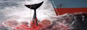 Für Kritiker ist der Walfang einfach nur grausam.
