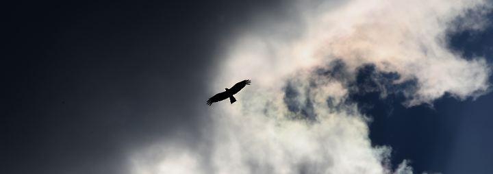 Neue Arten im großen Atlas: Wolken - ein Rätsel für die Wissenschaft