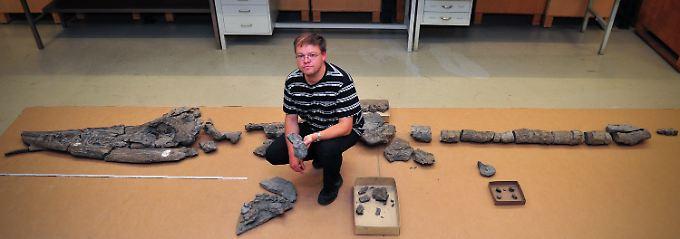 """Der Paläontologe und Saurierexperte, Rainer Schoch, präsentiert das Fossil einer Fischsaurierart mit dem Namen """"Schwäbischer Seedrache"""" im Naturkundemuseum in Stuttgart."""