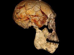 Ein in Kenia entdeckter Schädel.