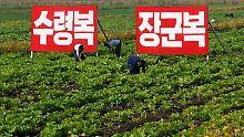 """Bauern arbeiten auf den Feldern einer Kooperative in Sariwon. Auf den Schildern steht: """"Ein Glück, den großen Führer (Kim Il Sung) als Vater zu haben"""" und """"Ein Glück, den großen General (Kim Jong Il) als Vater zu haben""""."""