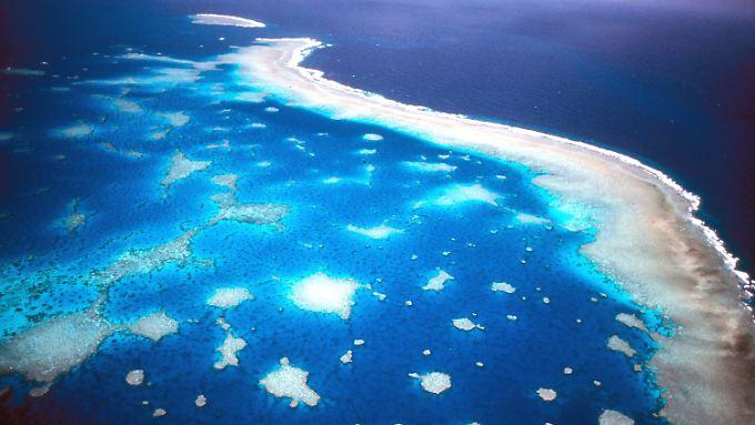Es sieht nicht gut aus für das Riff: Luftaufnahme des Great Barrier Riffs vor der Küste Australiens.