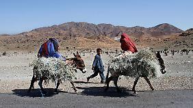 Kinder transportieren Feuerholz auf Eseln.