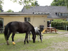 Blick auf Wohnanlage und Pferdekoppel.