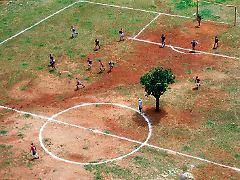 Ein Baum mitten auf dem Spielfeld: Das kann schon einmal vorkommen.