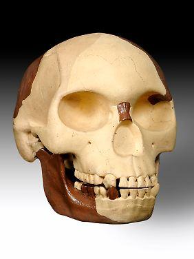Der Schäden (Rekonstruktion) besteht aus eingefärbten Menschen- und Tierknochen.