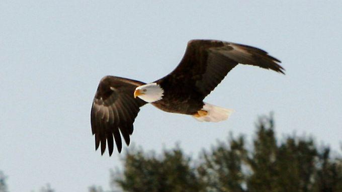 Der Adler war zuvor über dem Park gekreist.
