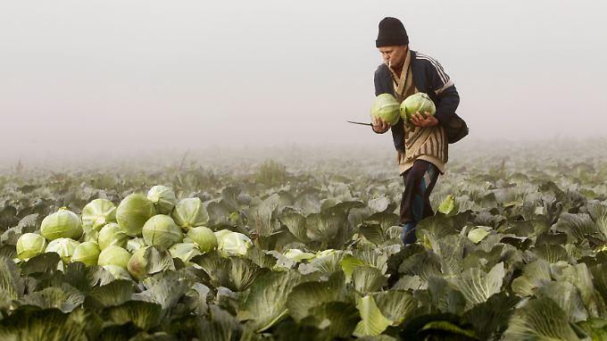 Die Agrarwirtschaft Weißrusslands kann auf keine helfende Hand verzichten.