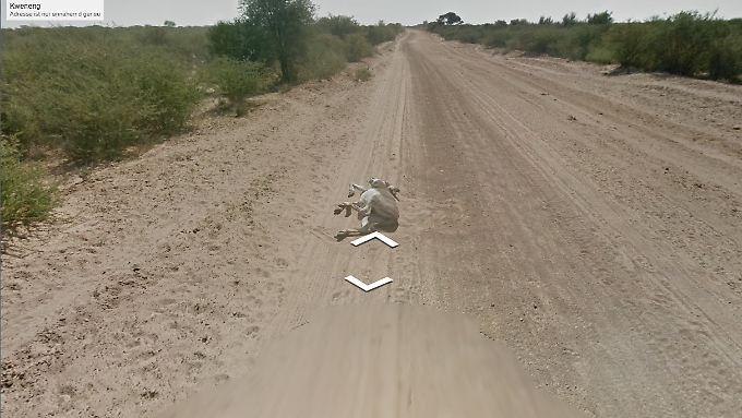 Der Esel bei seinem Sandbad - das Google-Auto fährt auf ihn zu und bleibt stehen.