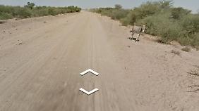 Das Google-Fahrzeug hat den Esel passiert - er lebt noch.