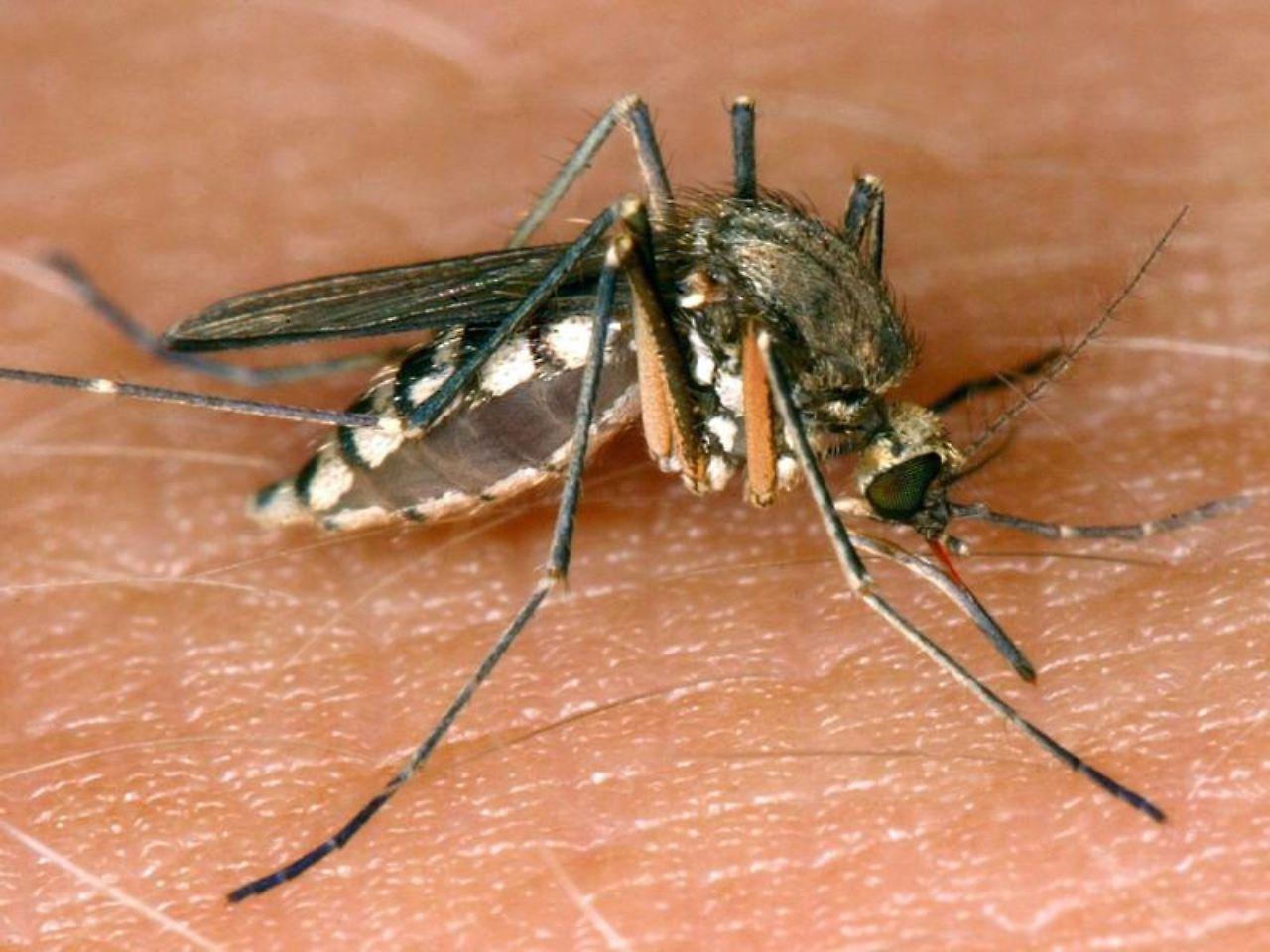 was gegen die insekten hilft: nach der flut kommen die mücken - n