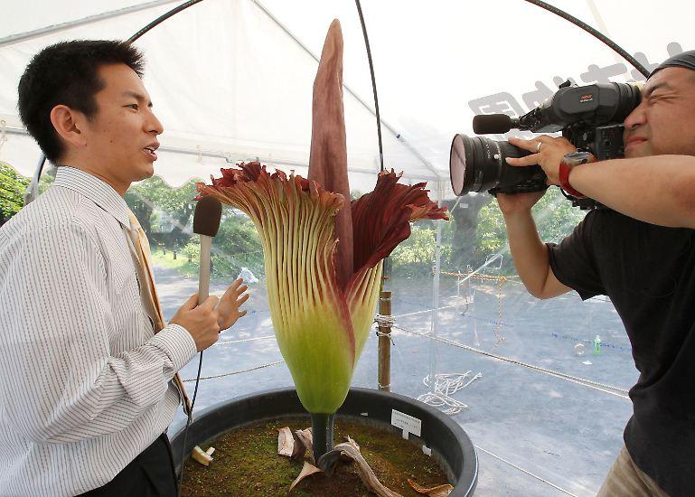 Sie schafft etwas, was nicht vielen Pflanzen gelingt: Immer wieder wird über sie berichtet.