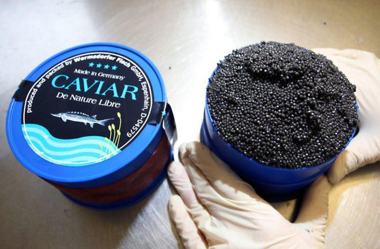 """Kaviar ist der Inbegriff von Luxus und Schlemmerei und wird auch """"Schwarzes Gold"""" genannt."""