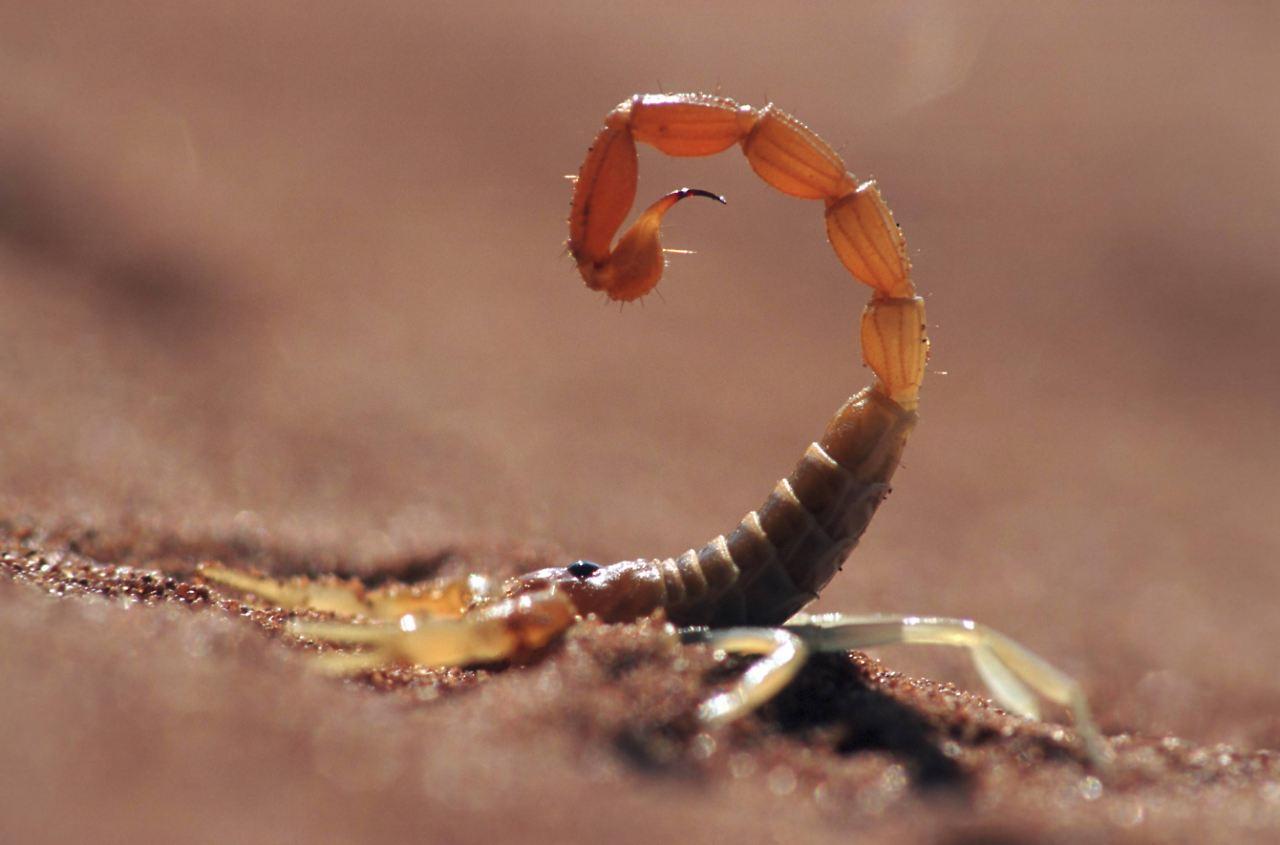 der tag hochgiftiger skorpion sticht frau in hamburger hotel n. Black Bedroom Furniture Sets. Home Design Ideas