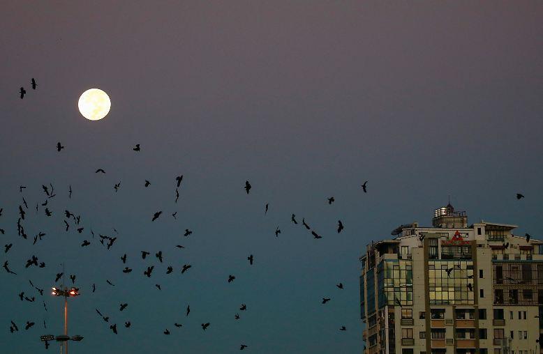 Seit 1948 war der Mond der Erde nicht mehr so nah und hat in der Nacht zum 15. November 2016 weltweit Himmelsgucker in seinen Bann gezogen.