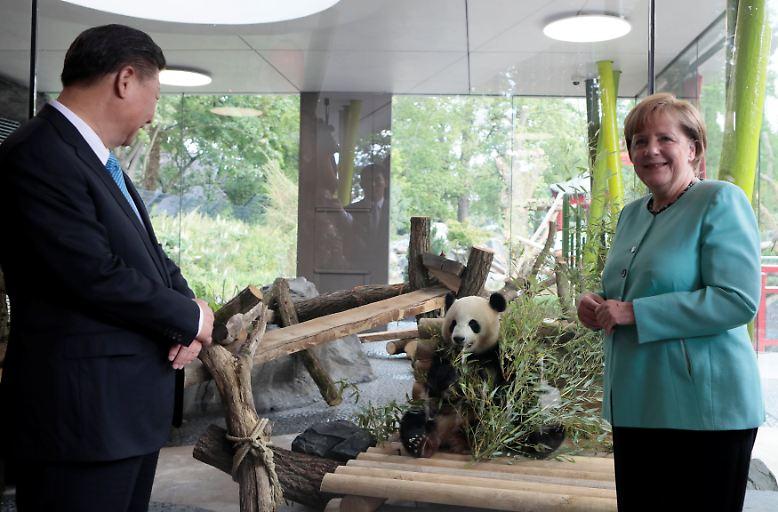 Hoher Besuch im Berliner Zoo: Hinter Chinas Staatspräsident Xi Jinping und Kanzlerin Angela Merkel ist einer der neuen Pandas in seinem neu eröffneten Zuhause zu sehen.