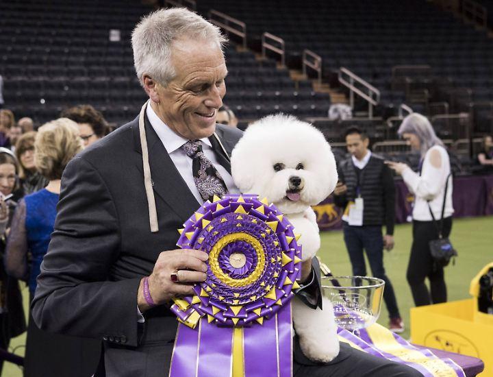 Stolzer Abrichter, stolzer Hund: Der 5-jährige Flynn ist der Gewinner der 142. Westminster Kennel Club Dog Show.