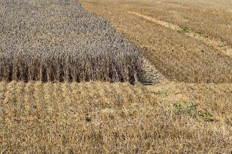 Dürre, Hitze und Trockenheit. Besonders die Landwirte leiden unter den extremen Temperaturen der letzten Wochen. Sie blicken besorgt auf die verdorrten Felder.