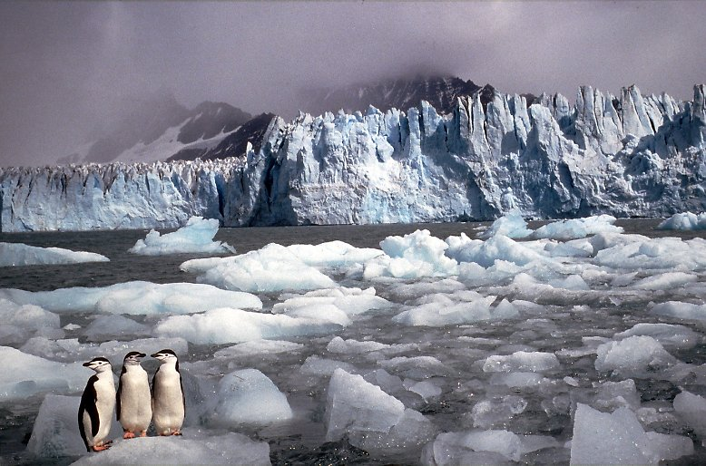 Windig, kalt und lebensfeindlich – kein Ort der Erde hat ein raueres Klima als die Antarktis.